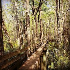 Double tap if you love Fort Myers Florida  Click bio link to access private rates. http://ift.tt/2jrLRuz . & Tap that follow button :)  . . @Floridadotcom @Floridadotcom @Floridadotcom  @renatakutek -  Six Mile Cypress Slough Preserve. Great for relaxing walks.  . . .