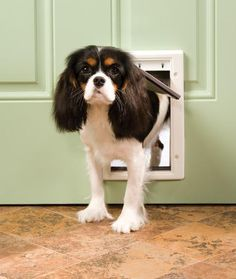 Best small dog breeds for kids cute puppies pinterest videos for kids and dog breeds - Safe pet dog doors ...