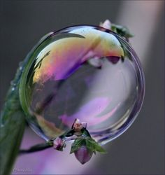 By Artist Van Annelies . Dew Drops, Rain Drops, Bubble Magic, Bubble Pictures, Drip Drop, Blowing Bubbles, Water Droplets, Through The Looking Glass, Crystal Ball