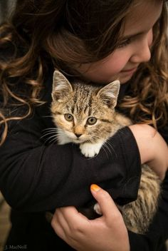Kitten, Precious. Children need pets to grow and appreciate and become better adults