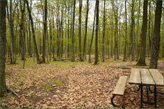 Awenda Provincial Park Ontario Canada Ontario Parks, Vineyard, Canada, Plants, Outdoor, Outdoors, Vine Yard, Vineyard Vines, Plant