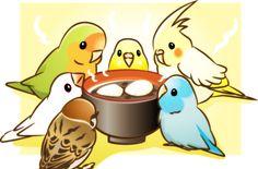 【美食+吃货】萌萌的鸟星人【多图杀猫】 | 爱宠小组 | 果壳网 科技有意思