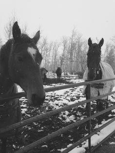 Winter pics