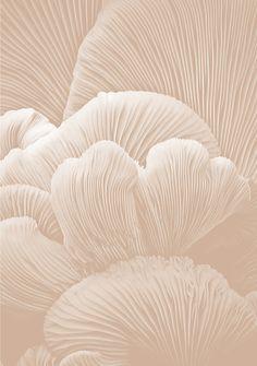 #tara_jarmon #summer2015 #miamisnapshots #beige #coral