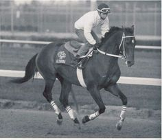 Alysheba, 1987 Kentucky Derby winner. Horse, hest, race, racing, jockey, man, male, beautiful, animal, gorgeous, photograph, photo b/w.