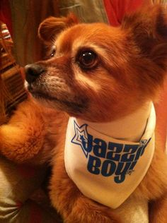 Jazzie - in his custom dog bandana