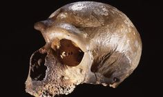 Maybe This Is The Reason Neanderthals Went Extinct