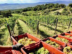 Vineyard, Outdoor, Outdoors, Vine Yard, Vineyard Vines, Outdoor Living, Garden