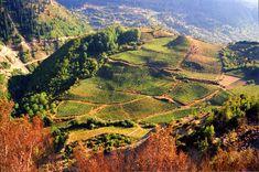 Metsovo Vineyard in Greece