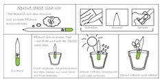 Bleistift zum Einpflanzen (mit verschiedenen Kräutermöglichkeiten vom Basilikum bis zur Tomate) von Sprout - bei Avocado Store günstig kaufen