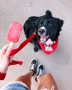 journée de parc, promenades, puppy et popsicles 🍭🐾 Chien Mira, Animals Beautiful, Cute Animals, Popsicles, Youtubers, Cute Dogs, Back To School, Puppies, Photo And Video