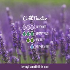 6 Diffuser Blends for Colds with Free Cheat Sheet by Loving Essential Oils | Cold Buster with lavender, eucalyptus, tea tree, peppermint essential oil. Just visit the blog post to download the printable. #lovingesentialoils #essentialoilsforcold #diffuserblendsforcolds