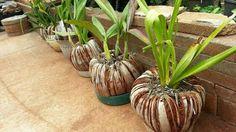 Coconut husk planters
