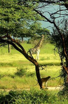Waza National Park, Cameroon by Bernard l Hermite