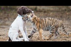 Photos Animaux - Animal Story - Page 18