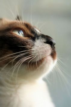 """A cat doesn't want all the world to love her--only those who she has chosen to love."" --Helen Thomson"