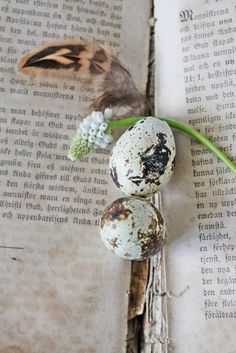 book, eggs and feather - photography still life