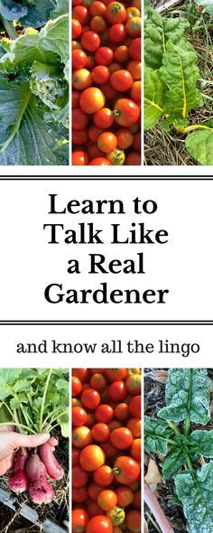 Ever been confused when reading a gardening book or chatting with a more experienced grower? Learn the most common vocabulary terms and soak up more information from now on!
