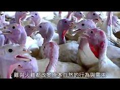 从农场到冰箱(肉类生产背后的真相)