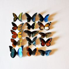 Butterfly Magnets Set of 15 Insects Kitchen Magnets Refrigerator Magnets Home Decor  The Butterfly magnets are painted to resemble the real