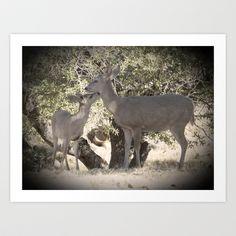 Such a Deer  Art Print by Judy Grant  - $19.76