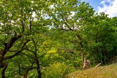 Der Wald im Wispertal, Landschaft, aufgenommen im Mai