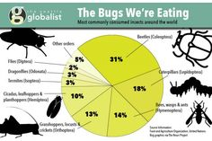 Seattle's 'Bug Chef' promotes the benefits of an insect diet | Seattle Globalist