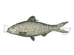#Vintage #Fish #Graphic - Vintage Clip Art - Fish Transfer - Printable Fish Graphic Transfer - Wilderness - Vintage Fish - Gone Fishing #Trout