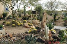 Innovative Desert Backyard Landscape Ideas Desert Landscaping Ideas For Front Yard Home Design Ideas - No matter where you live, you are probably mosting l Succulent Landscaping, Landscaping With Rocks, Landscaping Plants, Front Yard Landscaping, Landscaping Ideas, Arizona Landscaping, Modern Landscaping, Backyard Ideas, Paradise Landscape