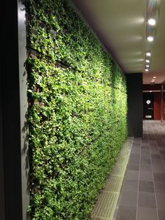 Lovely new Greenwall bringing fresh air to another lucky City of London office