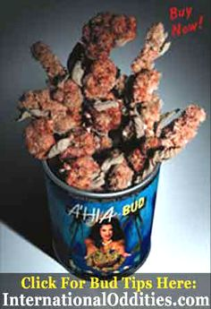 """Ahia Bud from International Oddities. The huge impressive herbal buds are legal and grown in the richest volcanic soil for effect.  A'hia buds are a great mellow smoke that is both smooth and satisfying. For more information call the official """"Ahia Hot-line"""" at 1 (818) 688-8188. For smokers who crave a rare smoke shop experience. A premier International Oddities legal herbal bud smoke. #LegalBud #Ahia #Review #LegalHawaiianBud #Smoking"""