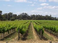 Mexican wines and wineries from Mexico: Let's visit the mexican wine region of the Laguna