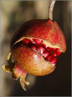 Fruit Photography, Still Life Photography, Fruit And Veg, Fresh Fruit, Pomegranate Tattoo, Grenade, Still Life Photos, Fruit Displays, Juicy Fruit