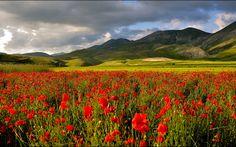 долина, горы, поле, маки