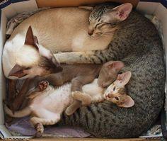 Box-o-cats.