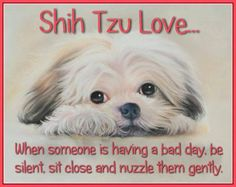 Shih Tzu love