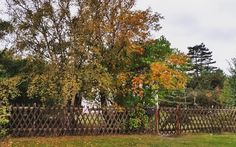 Willkommen im #Oktober.  #hiddensee #herbst #natur #autumn #nature #baum #landscape #beautiful #farben #bunt #blätter