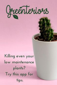 Plant care made easy Indoor Plants Low Light, Indoor Trees, Propagating Succulents, Succulents Diy, Cat Friendly Plants, Low Maintenance Indoor Plants, Succulent Care, Gardening For Beginners, Cool Plants