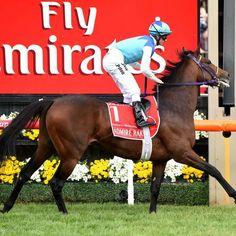 An equine vet has said establishing the exact cause of Melbourne Cup racehorse Admire Rakti's heart failure may take weeks. 5 November 2014.
