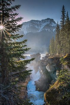"""forest-nation: """" Athabasca Falls, Alberta, Canada. by thewhilelife """""""