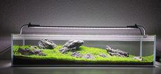 /aquascaping- #AquariumDecorationsIdeas
