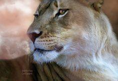 Löwe - Zeichnung