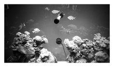 Triton Aquariums #aquarium #homedecor #fishtank #homedesign #luxuryhome #luxury #reef #sps #lps #oceanview #chicago #designideas #diy #reeftank #inspirational #reef #homedesign #VIP #wealth #nature #artistic #reefporn #saltwateraquarium #frag #marineaquarium #la #aquascape #aquascaping #sealife #sea #pets