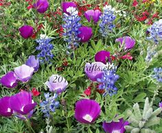 Add some color to your garden this spring!