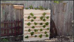 Vertical Gardening: A Vertical Pallet Garden Recycles Trash Into Treasure Part 1 of 3 | Suburban Stone Age