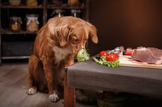 New dog food formulas make it onto store shelves every week. Be a food-savvy pet parent and learn the lingo when it comes to human grade ingredients. Animal Agriculture, Dog Health Tips, Mini Goldendoodle, Can Dogs Eat, Kitchen Humor, Cat Feeding, Dog Eating, How To Do Yoga, Celery