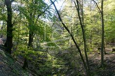 Tiefer Graben im Wald - auf http://ronni-shop.fineartprint.de