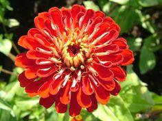 Resultados de la Búsqueda de imágenes de Google de http://www.flowerwallpapers.org/wallpapers/image/Flower-Picture.jpg