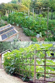 15 easy attractive DIY cucumber trellis ideas on how to build vertical garden growing structures with simple materials for productive vegetable gardening! - A Piece of Rainbow backyard, landscaping, gardening tips, homesteading grow your own food Allotment Gardening, Container Gardening Vegetables, Vegetable Gardening, Gardening Tips, Vegetable Garden Planning, Vegetable Garden Design, Small Gardens, Outdoor Gardens, Cucumber Trellis