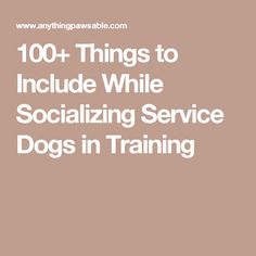 100+ Things to Include While Socializing Service Dogs in Training